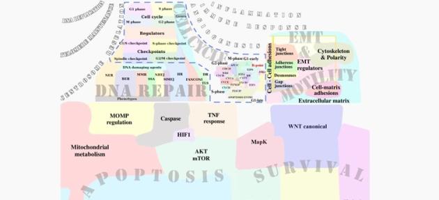visuel-google_map-cancer(1)
